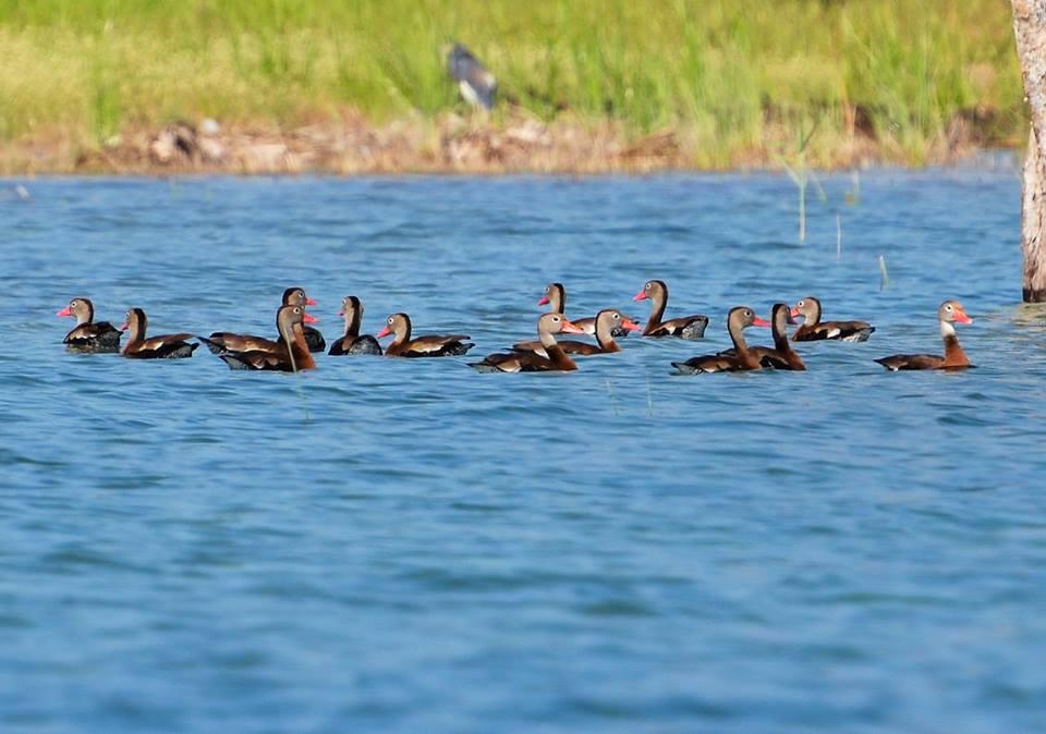 Birds at Lake Peten Itza, Petén, Guatemala