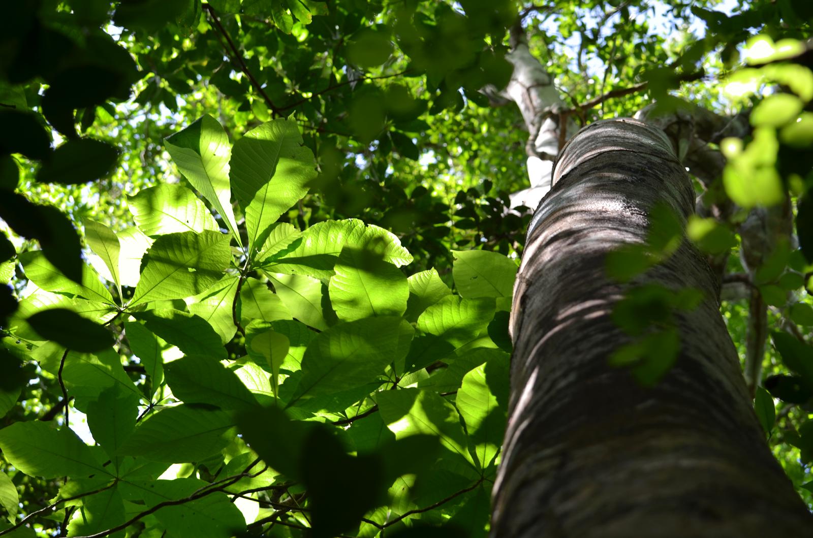 Al pie de un gran árbol