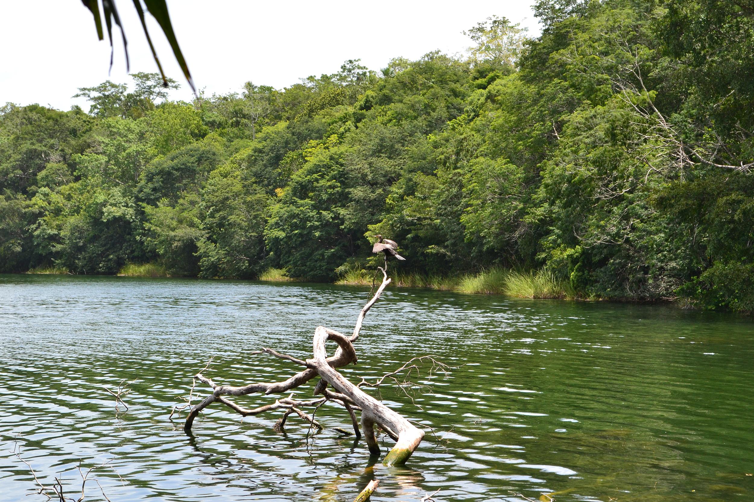 Bird at Puerto Arturo