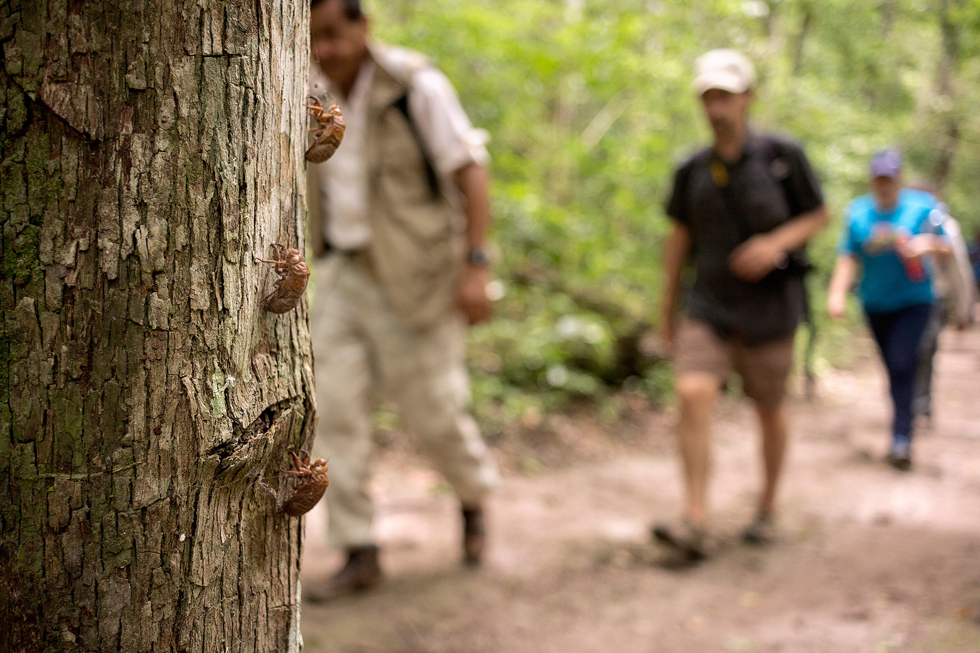 Beetles at El Mirador, Petén