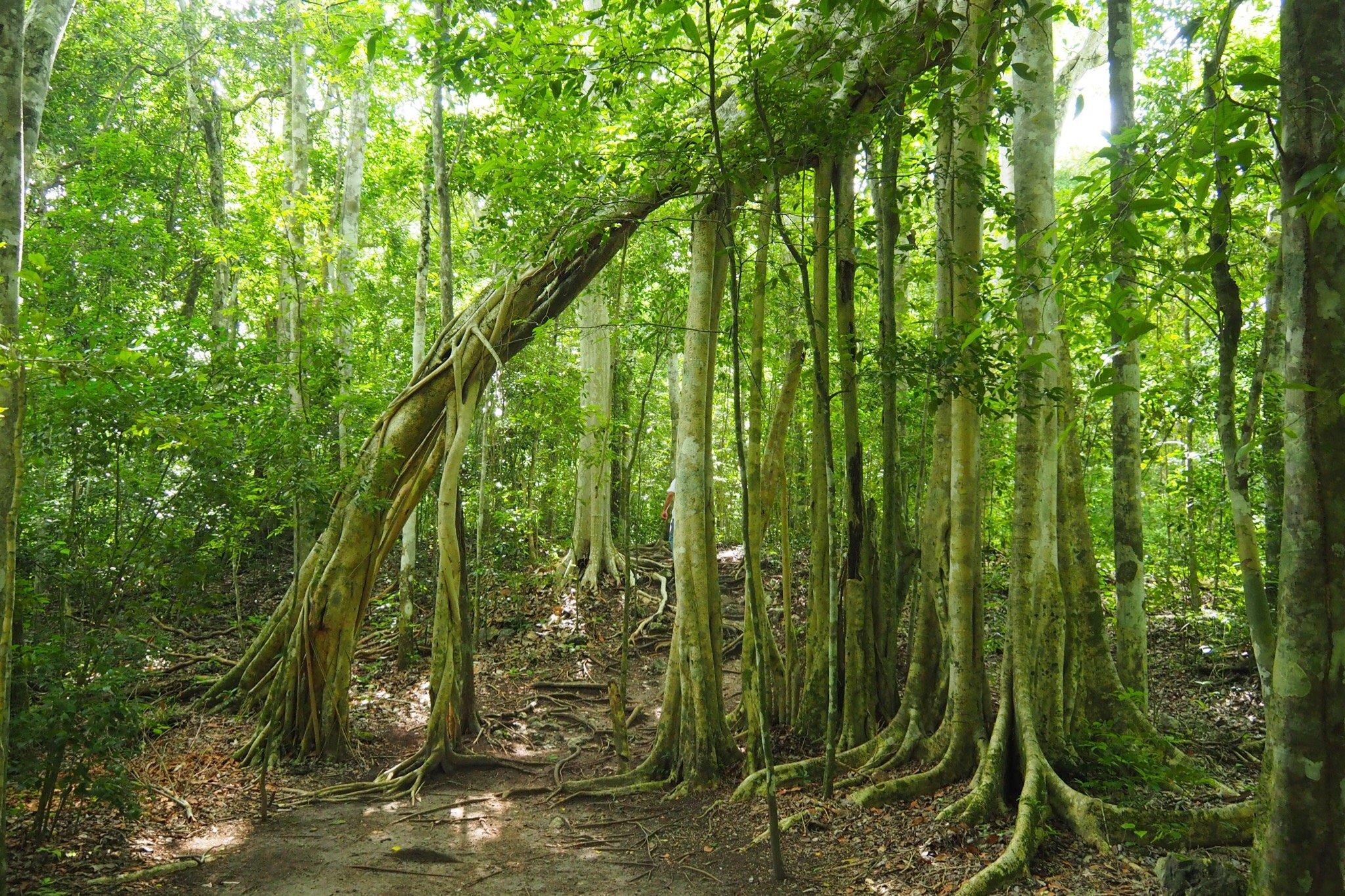 Trees at Petén, Guatemala