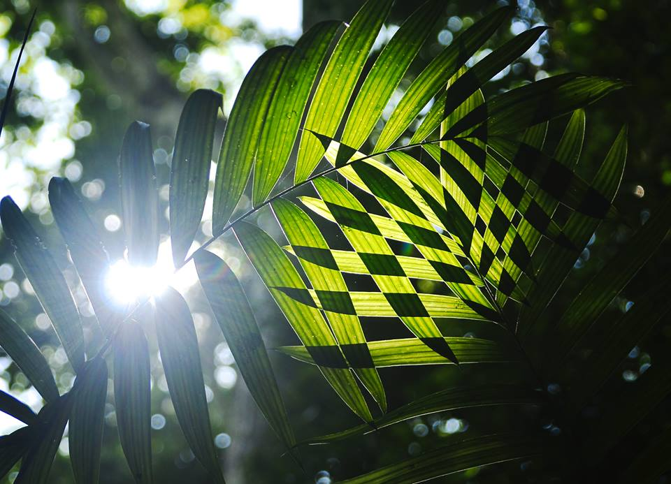 Sun light through the jungle at Petén