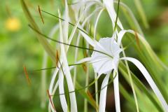 Flores en Petén