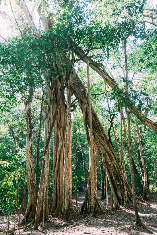 Trees at El Mirador